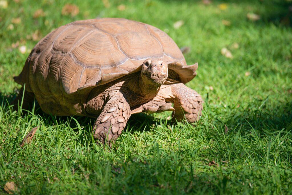 be more tortoise