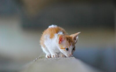 Curiousity Saved the Cat